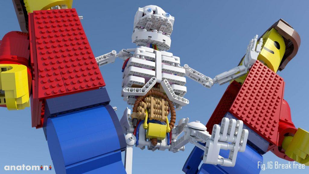 LEGO Ideas Anatomini door Stephan Niks
