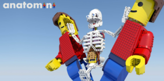 LEGO Ideas Anatomini header