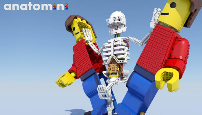 LEGO Ideas Anatomini header