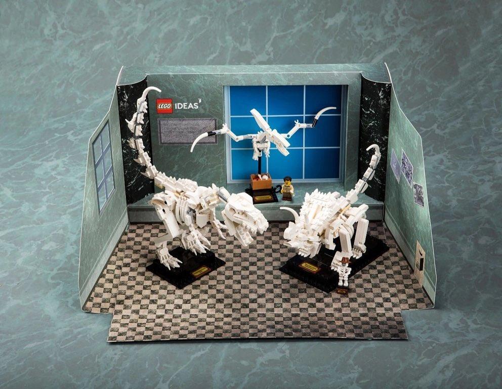 Dinosaur Fossils promotional display